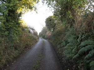 carrigaline walk