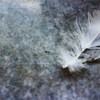 A single white feather...
